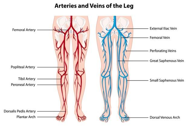 Le differenze tra ecocolordoppler venoso e arterioso